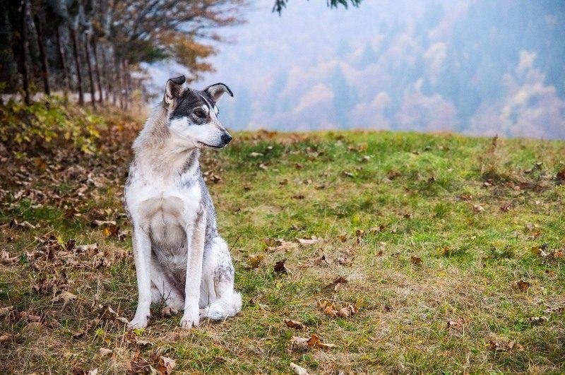 Choosing a Dog House